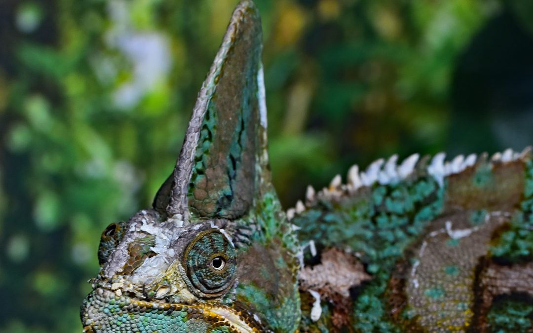 It's Hard to Be A Chameleon in a Quarantine